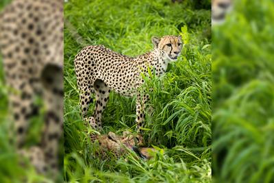 Wildlife Cinematographer Steve Lumpkin Adopts Sonnet Solo10G to Accelerate Postproduction